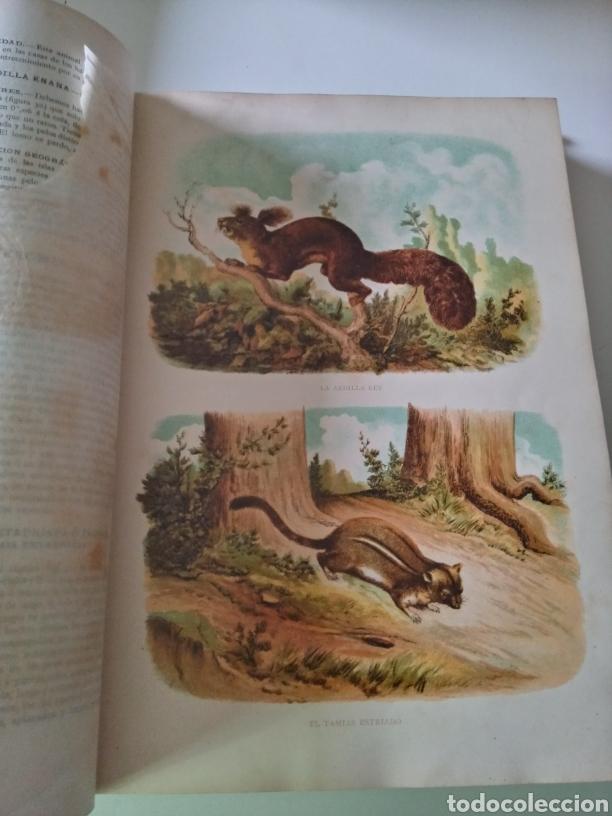 Libros antiguos: La Creacion Historia Natural 1880. Dr. A. E. Brehm. 7 volumenes . - Foto 11 - 240660865