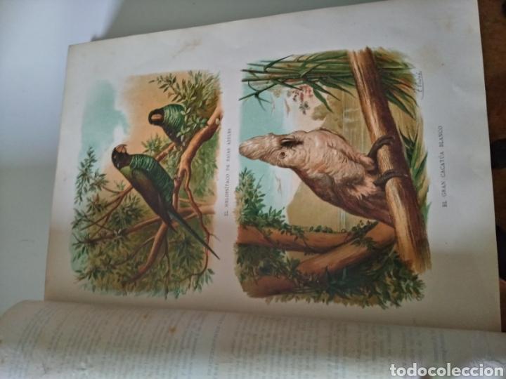 Libros antiguos: La Creacion Historia Natural 1880. Dr. A. E. Brehm. 7 volumenes . - Foto 13 - 240660865