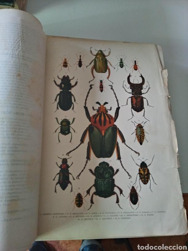 Libros antiguos: La Creacion Historia Natural 1880. Dr. A. E. Brehm. 7 volumenes . - Foto 17 - 240660865