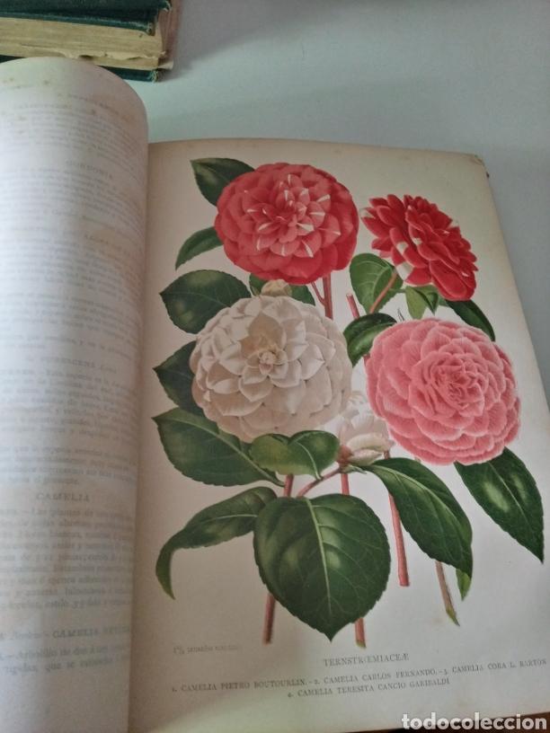 Libros antiguos: La Creacion Historia Natural 1880. Dr. A. E. Brehm. 7 volumenes . - Foto 19 - 240660865