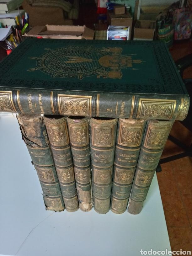 Libros antiguos: La Creacion Historia Natural 1880. Dr. A. E. Brehm. 7 volumenes . - Foto 22 - 240660865