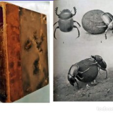 Livros antigos: LA VIDA DE LOS INSECTOS.LIBRO ANTIGUO. Lote 241444765