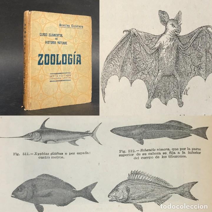1932 - CURSO DE HISTORIA NATURAL - ZOOLOGIA - SANTANDER - ILUSTRADO - BIOLOGIA (Libros Antiguos, Raros y Curiosos - Ciencias, Manuales y Oficios - Bilogía y Botánica)