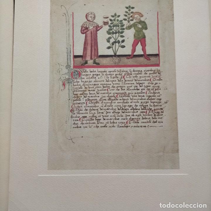 Libros antiguos: ERBOLARIO BERGOMENSE 1441 A. D. (Magister Antonius Guarnerinus de Padua (Antonio Guarnerio) - Foto 6 - 246922680