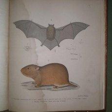 Libros antiguos: PHILIPPI, FEDERICO Y R.A: DESCRIPCIÓN DE LOS MAMÍFEROS TRAÍDOS A TARAPACÁ (CHILE) 1896. PLENA PIEL. Lote 178975950