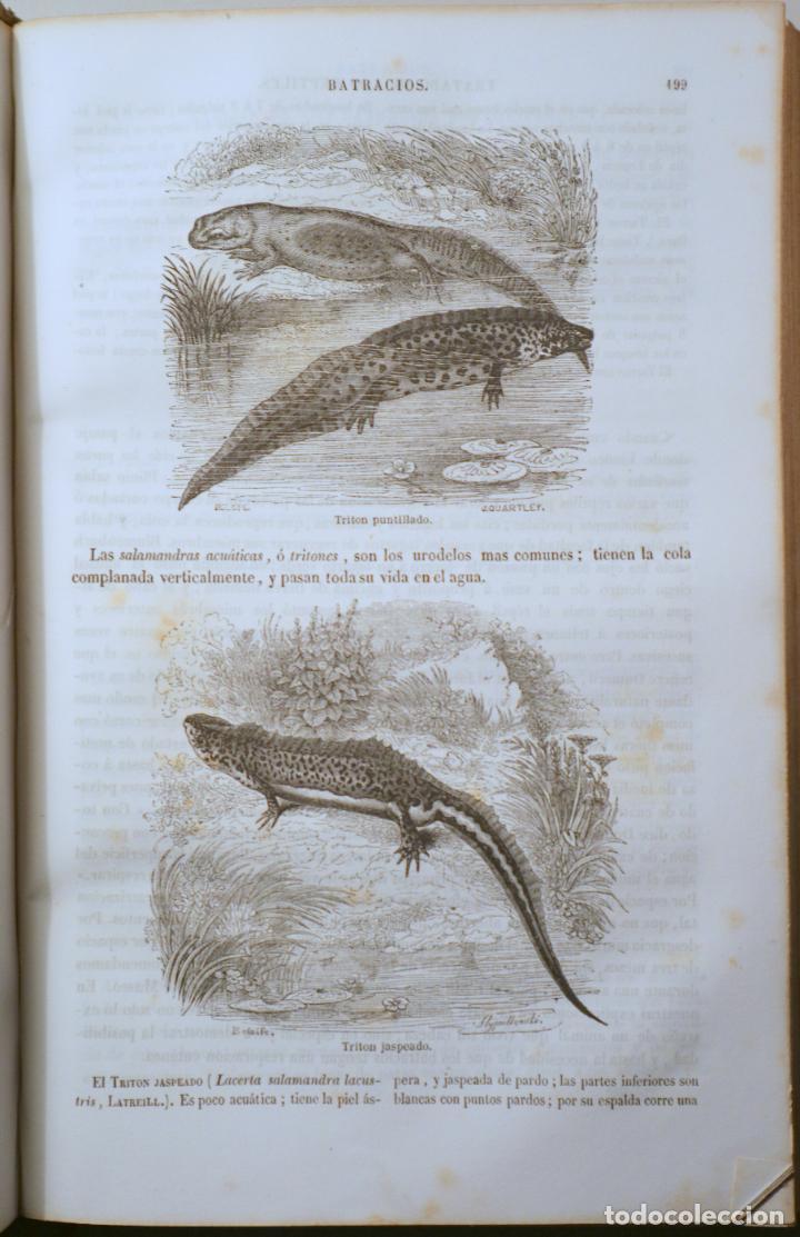 Libros antiguos: BOITARD, M. - MUSEO DE HISTORIA NATURAL. MAMÍFEROS - Barcelona 1850 - Muy ilustrado - Foto 3 - 254918585