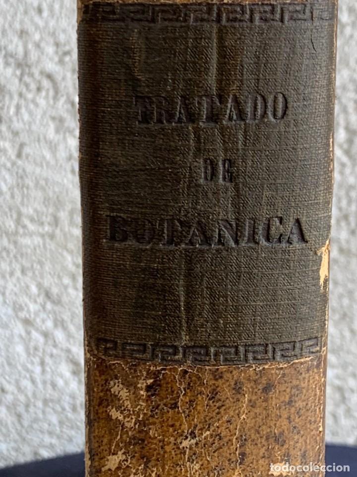 Libros antiguos: TRATADO DE BOTANICA EDUARDO STRASBURGER 15ª ED 1923 - Foto 3 - 287353688