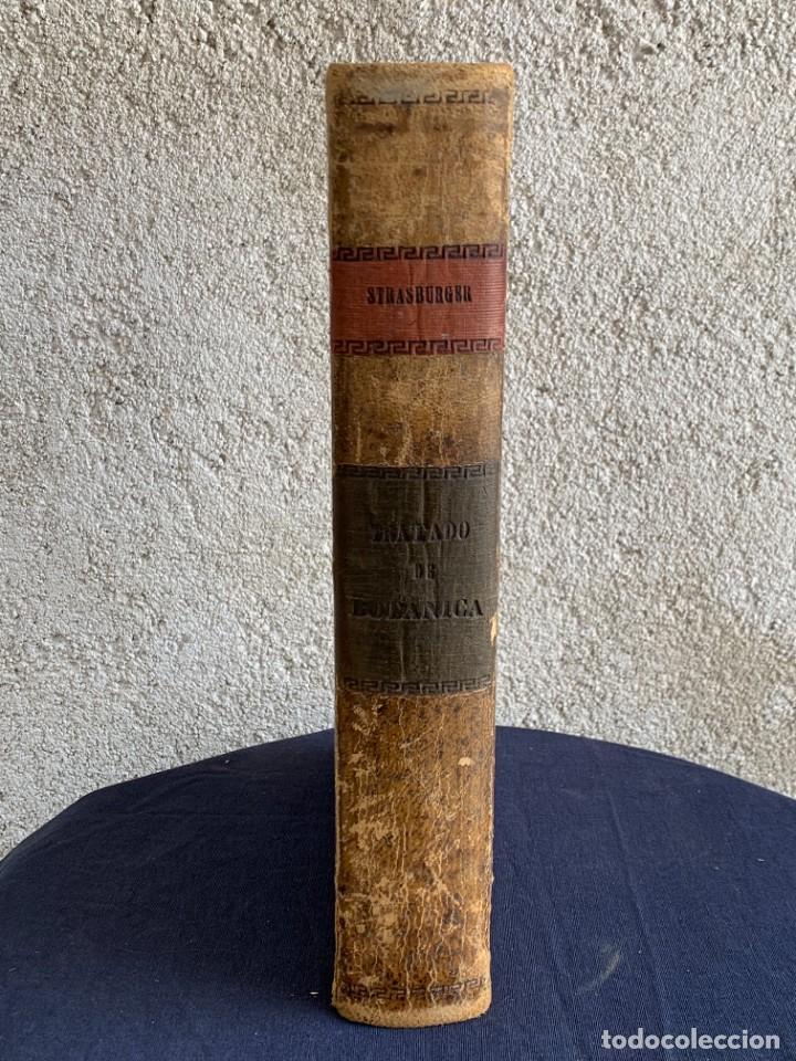 Libros antiguos: TRATADO DE BOTANICA EDUARDO STRASBURGER 15ª ED 1923 - Foto 4 - 287353688