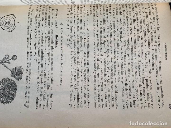 Libros antiguos: TRATADO DE BOTANICA EDUARDO STRASBURGER 15ª ED 1923 - Foto 7 - 287353688