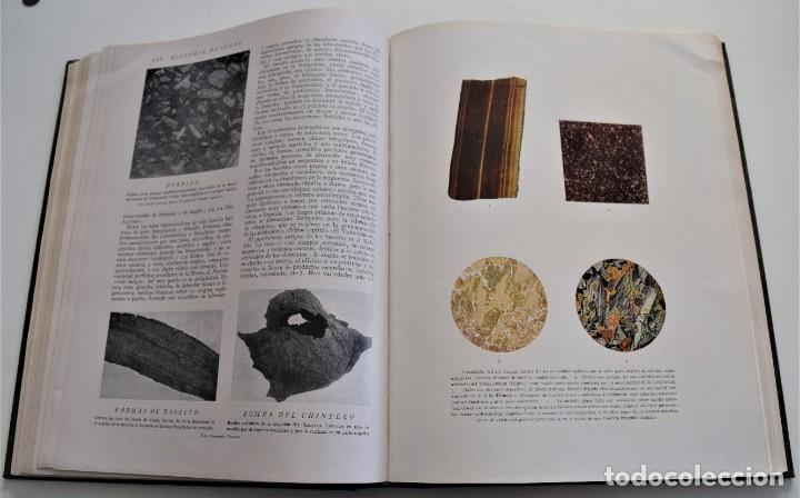 Libros antiguos: HISTORIA NATURAL - INSTITUTO GALLACH - COMPLETA 4 TOMOS ZOOLOGÍA, BOTÁNICA Y GEOLOGÍA - AÑO - Foto 9 - 260582805