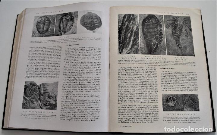 Libros antiguos: HISTORIA NATURAL - INSTITUTO GALLACH - COMPLETA 4 TOMOS ZOOLOGÍA, BOTÁNICA Y GEOLOGÍA - AÑO - Foto 11 - 260582805
