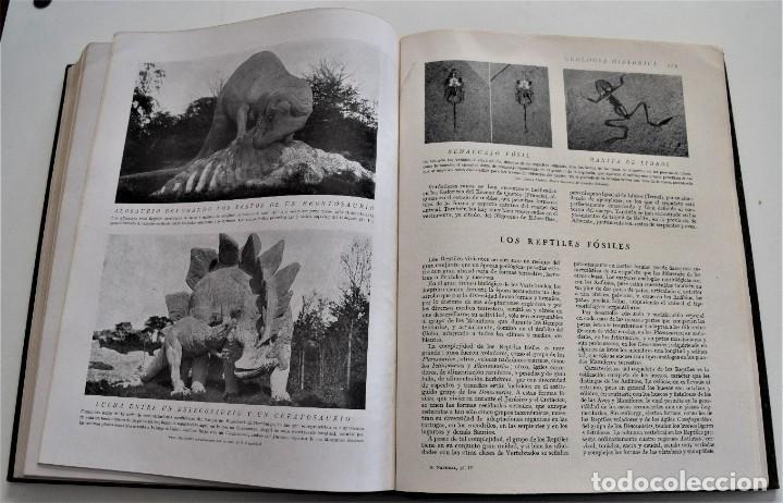 Libros antiguos: HISTORIA NATURAL - INSTITUTO GALLACH - COMPLETA 4 TOMOS ZOOLOGÍA, BOTÁNICA Y GEOLOGÍA - AÑO - Foto 12 - 260582805
