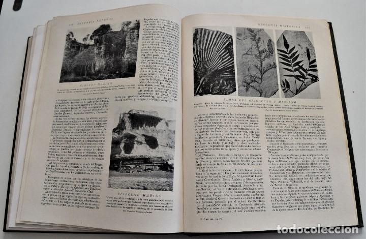 Libros antiguos: HISTORIA NATURAL - INSTITUTO GALLACH - COMPLETA 4 TOMOS ZOOLOGÍA, BOTÁNICA Y GEOLOGÍA - AÑO - Foto 13 - 260582805