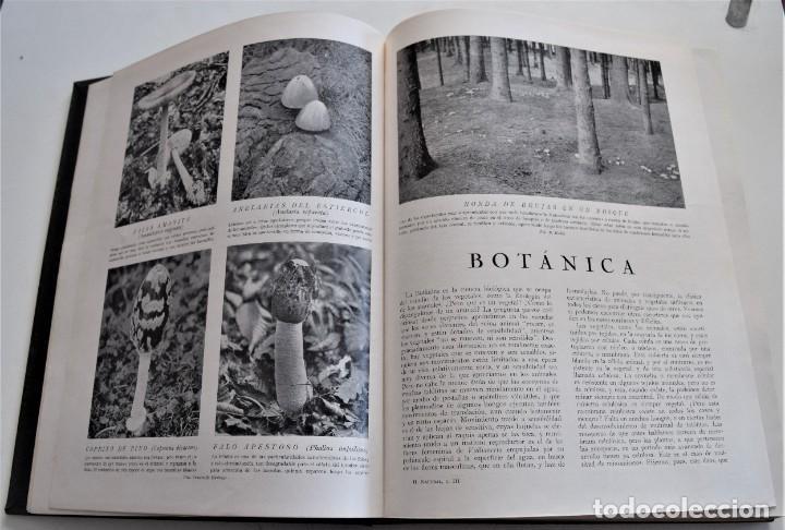 Libros antiguos: HISTORIA NATURAL - INSTITUTO GALLACH - COMPLETA 4 TOMOS ZOOLOGÍA, BOTÁNICA Y GEOLOGÍA - AÑO - Foto 16 - 260582805