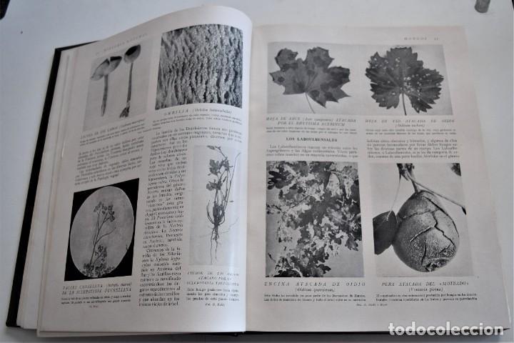 Libros antiguos: HISTORIA NATURAL - INSTITUTO GALLACH - COMPLETA 4 TOMOS ZOOLOGÍA, BOTÁNICA Y GEOLOGÍA - AÑO - Foto 17 - 260582805