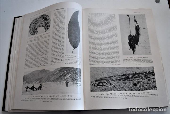 Libros antiguos: HISTORIA NATURAL - INSTITUTO GALLACH - COMPLETA 4 TOMOS ZOOLOGÍA, BOTÁNICA Y GEOLOGÍA - AÑO - Foto 18 - 260582805