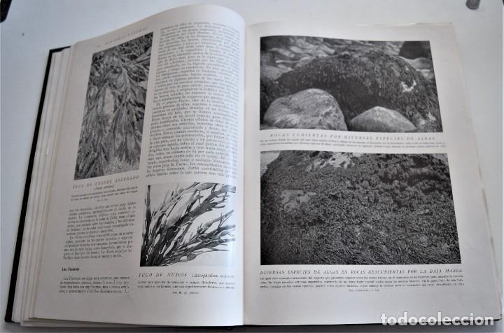 Libros antiguos: HISTORIA NATURAL - INSTITUTO GALLACH - COMPLETA 4 TOMOS ZOOLOGÍA, BOTÁNICA Y GEOLOGÍA - AÑO - Foto 19 - 260582805
