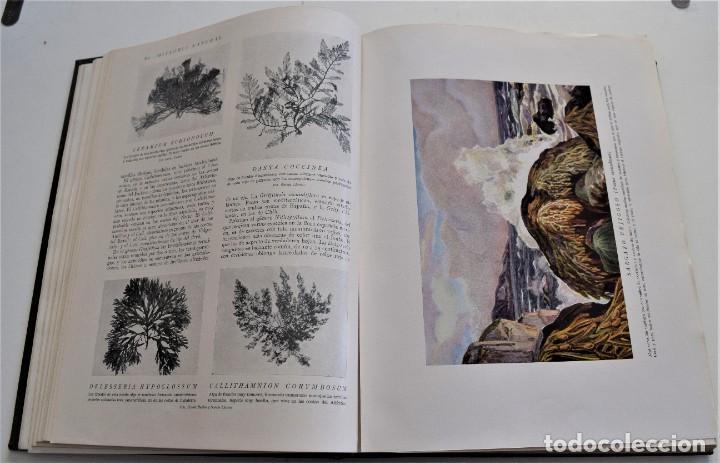 Libros antiguos: HISTORIA NATURAL - INSTITUTO GALLACH - COMPLETA 4 TOMOS ZOOLOGÍA, BOTÁNICA Y GEOLOGÍA - AÑO - Foto 20 - 260582805