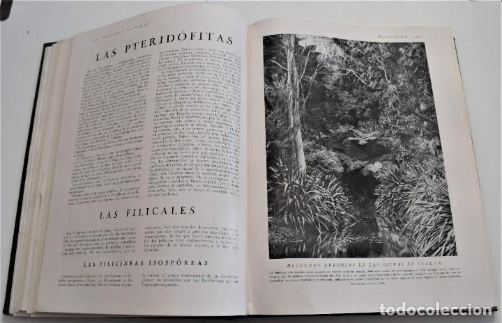 Libros antiguos: HISTORIA NATURAL - INSTITUTO GALLACH - COMPLETA 4 TOMOS ZOOLOGÍA, BOTÁNICA Y GEOLOGÍA - AÑO - Foto 21 - 260582805
