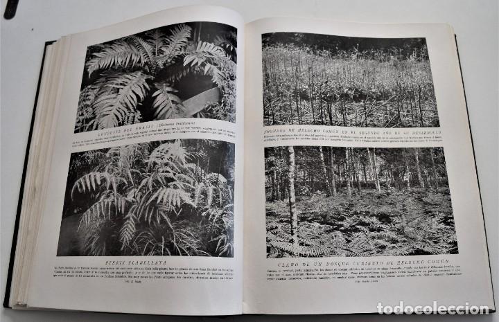 Libros antiguos: HISTORIA NATURAL - INSTITUTO GALLACH - COMPLETA 4 TOMOS ZOOLOGÍA, BOTÁNICA Y GEOLOGÍA - AÑO - Foto 22 - 260582805