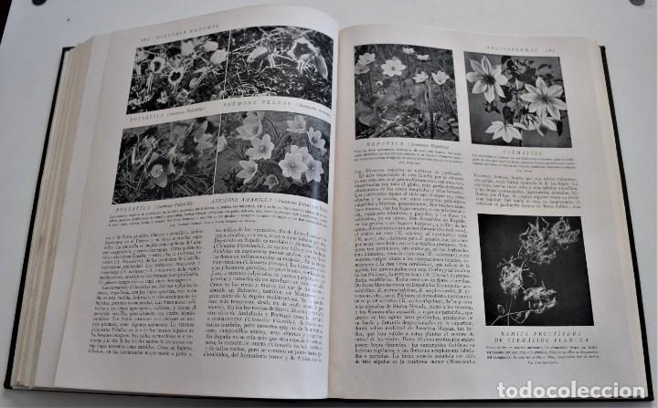 Libros antiguos: HISTORIA NATURAL - INSTITUTO GALLACH - COMPLETA 4 TOMOS ZOOLOGÍA, BOTÁNICA Y GEOLOGÍA - AÑO - Foto 23 - 260582805