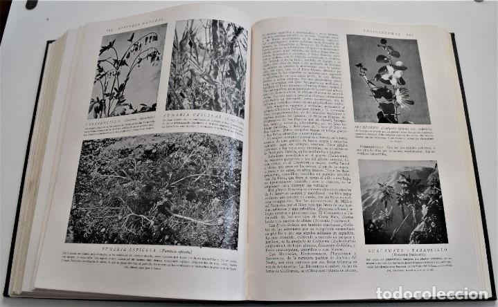 Libros antiguos: HISTORIA NATURAL - INSTITUTO GALLACH - COMPLETA 4 TOMOS ZOOLOGÍA, BOTÁNICA Y GEOLOGÍA - AÑO - Foto 24 - 260582805