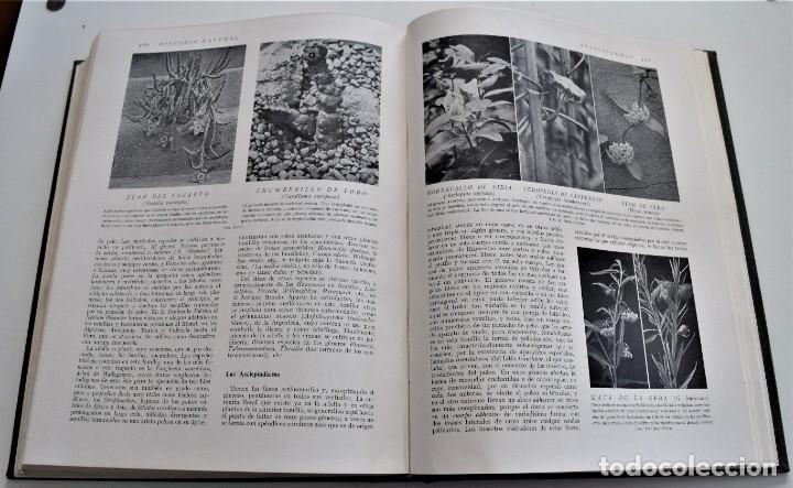 Libros antiguos: HISTORIA NATURAL - INSTITUTO GALLACH - COMPLETA 4 TOMOS ZOOLOGÍA, BOTÁNICA Y GEOLOGÍA - AÑO - Foto 25 - 260582805