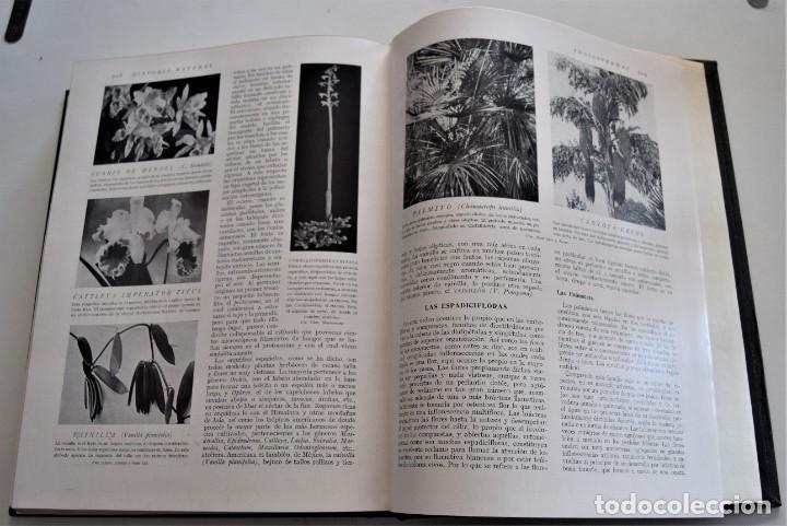 Libros antiguos: HISTORIA NATURAL - INSTITUTO GALLACH - COMPLETA 4 TOMOS ZOOLOGÍA, BOTÁNICA Y GEOLOGÍA - AÑO - Foto 26 - 260582805