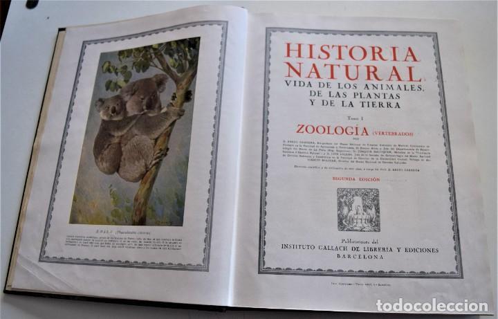 Libros antiguos: HISTORIA NATURAL - INSTITUTO GALLACH - COMPLETA 4 TOMOS ZOOLOGÍA, BOTÁNICA Y GEOLOGÍA - AÑO - Foto 27 - 260582805
