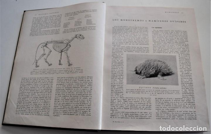 Libros antiguos: HISTORIA NATURAL - INSTITUTO GALLACH - COMPLETA 4 TOMOS ZOOLOGÍA, BOTÁNICA Y GEOLOGÍA - AÑO - Foto 28 - 260582805