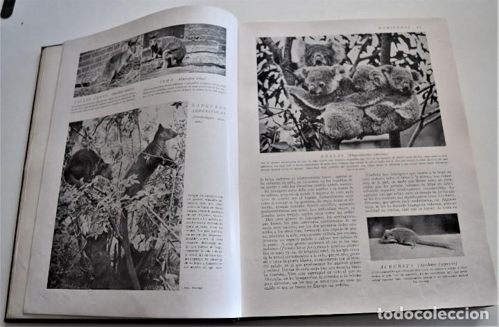 Libros antiguos: HISTORIA NATURAL - INSTITUTO GALLACH - COMPLETA 4 TOMOS ZOOLOGÍA, BOTÁNICA Y GEOLOGÍA - AÑO - Foto 29 - 260582805