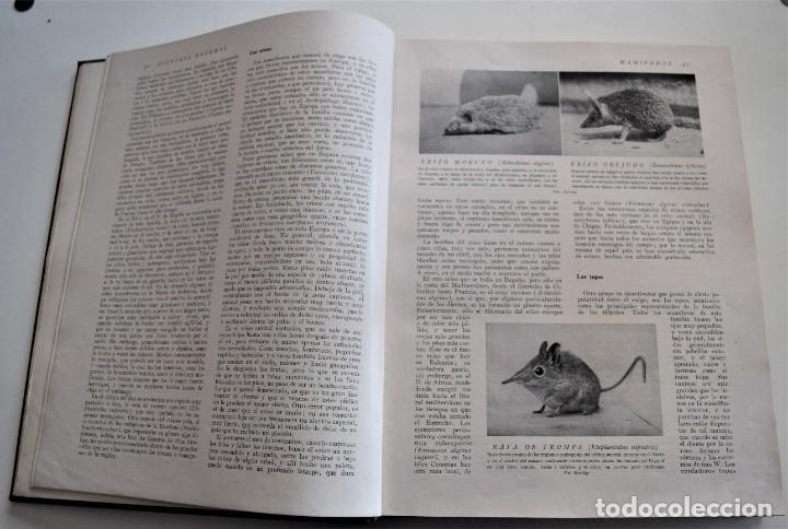 Libros antiguos: HISTORIA NATURAL - INSTITUTO GALLACH - COMPLETA 4 TOMOS ZOOLOGÍA, BOTÁNICA Y GEOLOGÍA - AÑO - Foto 30 - 260582805