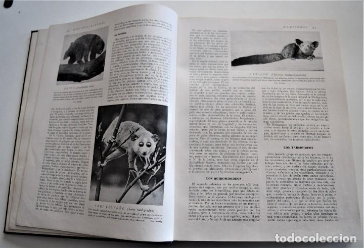 Libros antiguos: HISTORIA NATURAL - INSTITUTO GALLACH - COMPLETA 4 TOMOS ZOOLOGÍA, BOTÁNICA Y GEOLOGÍA - AÑO - Foto 31 - 260582805