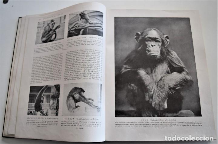 Libros antiguos: HISTORIA NATURAL - INSTITUTO GALLACH - COMPLETA 4 TOMOS ZOOLOGÍA, BOTÁNICA Y GEOLOGÍA - AÑO - Foto 32 - 260582805