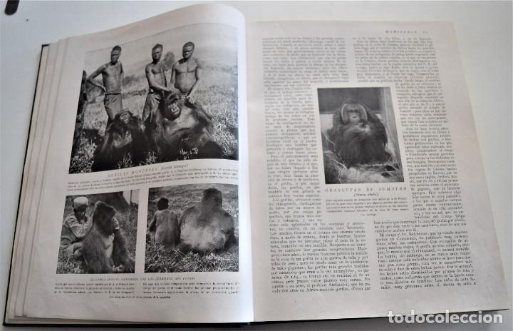 Libros antiguos: HISTORIA NATURAL - INSTITUTO GALLACH - COMPLETA 4 TOMOS ZOOLOGÍA, BOTÁNICA Y GEOLOGÍA - AÑO - Foto 33 - 260582805