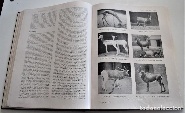 Libros antiguos: HISTORIA NATURAL - INSTITUTO GALLACH - COMPLETA 4 TOMOS ZOOLOGÍA, BOTÁNICA Y GEOLOGÍA - AÑO - Foto 34 - 260582805