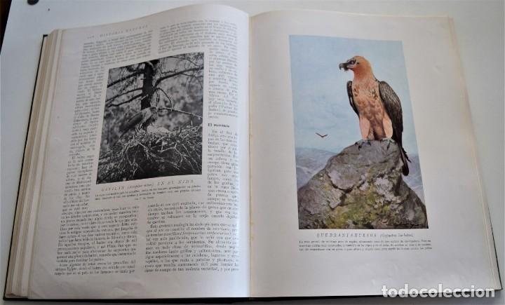 Libros antiguos: HISTORIA NATURAL - INSTITUTO GALLACH - COMPLETA 4 TOMOS ZOOLOGÍA, BOTÁNICA Y GEOLOGÍA - AÑO - Foto 35 - 260582805