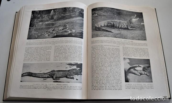 Libros antiguos: HISTORIA NATURAL - INSTITUTO GALLACH - COMPLETA 4 TOMOS ZOOLOGÍA, BOTÁNICA Y GEOLOGÍA - AÑO - Foto 36 - 260582805