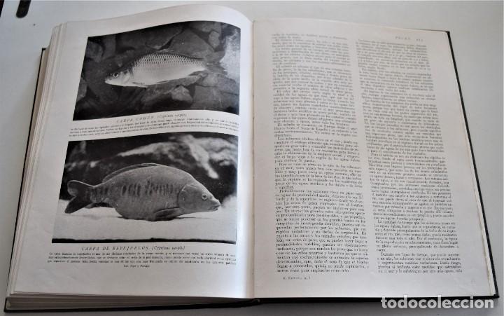 Libros antiguos: HISTORIA NATURAL - INSTITUTO GALLACH - COMPLETA 4 TOMOS ZOOLOGÍA, BOTÁNICA Y GEOLOGÍA - AÑO - Foto 38 - 260582805