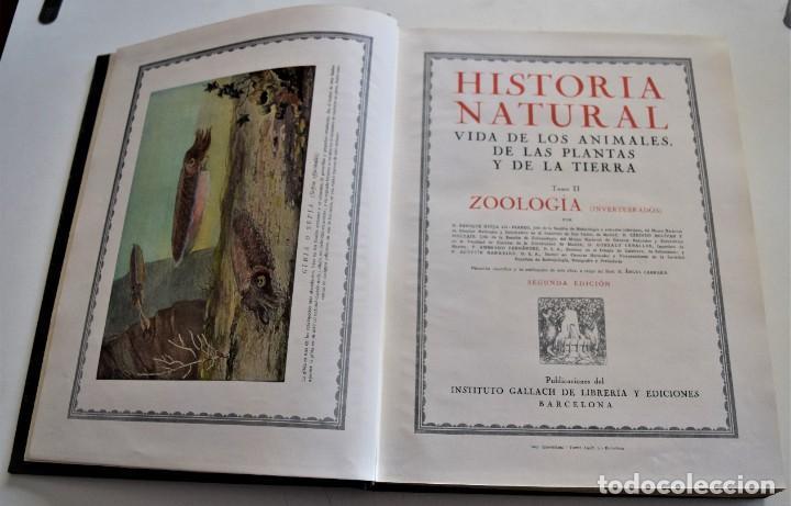 Libros antiguos: HISTORIA NATURAL - INSTITUTO GALLACH - COMPLETA 4 TOMOS ZOOLOGÍA, BOTÁNICA Y GEOLOGÍA - AÑO - Foto 39 - 260582805