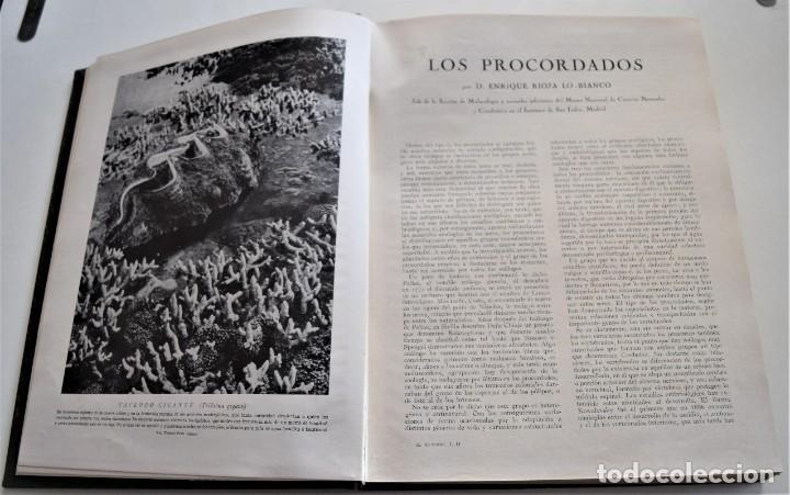 Libros antiguos: HISTORIA NATURAL - INSTITUTO GALLACH - COMPLETA 4 TOMOS ZOOLOGÍA, BOTÁNICA Y GEOLOGÍA - AÑO - Foto 40 - 260582805