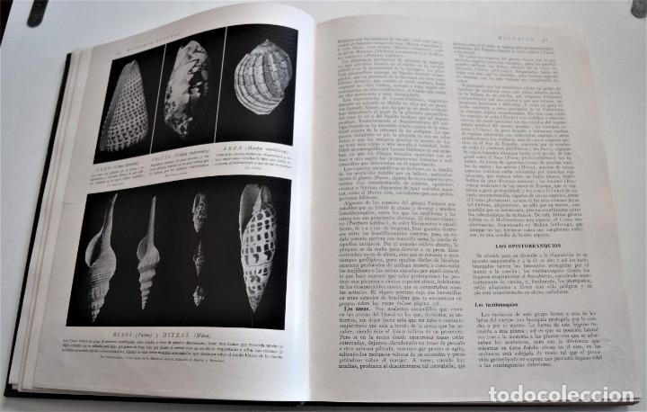 Libros antiguos: HISTORIA NATURAL - INSTITUTO GALLACH - COMPLETA 4 TOMOS ZOOLOGÍA, BOTÁNICA Y GEOLOGÍA - AÑO - Foto 42 - 260582805