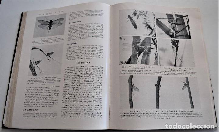 Libros antiguos: HISTORIA NATURAL - INSTITUTO GALLACH - COMPLETA 4 TOMOS ZOOLOGÍA, BOTÁNICA Y GEOLOGÍA - AÑO - Foto 43 - 260582805