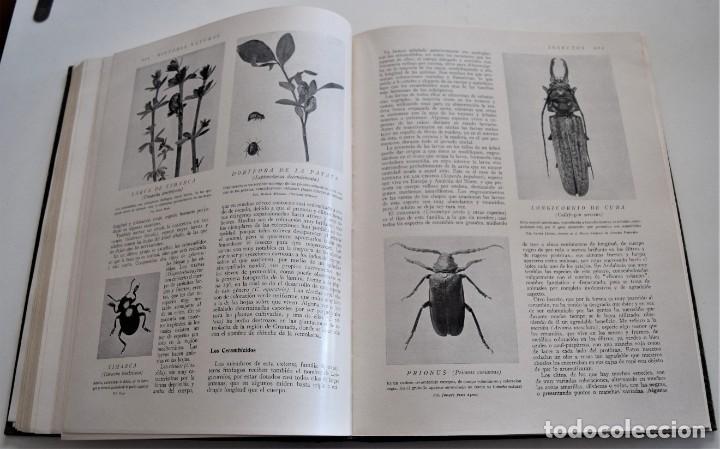 Libros antiguos: HISTORIA NATURAL - INSTITUTO GALLACH - COMPLETA 4 TOMOS ZOOLOGÍA, BOTÁNICA Y GEOLOGÍA - AÑO - Foto 44 - 260582805