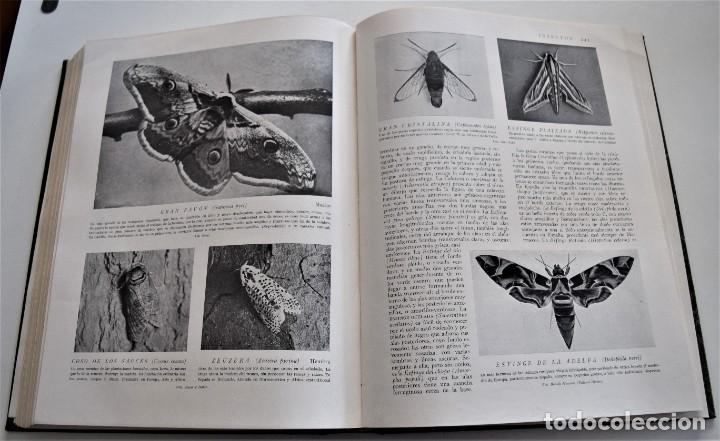 Libros antiguos: HISTORIA NATURAL - INSTITUTO GALLACH - COMPLETA 4 TOMOS ZOOLOGÍA, BOTÁNICA Y GEOLOGÍA - AÑO - Foto 45 - 260582805