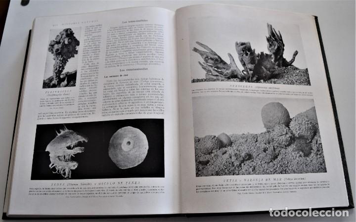 Libros antiguos: HISTORIA NATURAL - INSTITUTO GALLACH - COMPLETA 4 TOMOS ZOOLOGÍA, BOTÁNICA Y GEOLOGÍA - AÑO - Foto 46 - 260582805