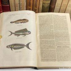 Libros antiguos: AÑO 1855 - BUFFON LOS TRES REINOS DE LA NATURALEZA TOMO V: ZOOLOGÍA - GRABADOS PECES. Lote 262050935