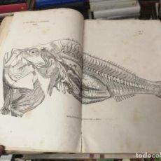Libros antiguos: LOS TRES REINOS DE LA NATURALEZA. MUSEO PINTORESCO DE HISTORIA NATURAL. TOMO V. ZOOLOGÍA. 1855. Lote 262822535