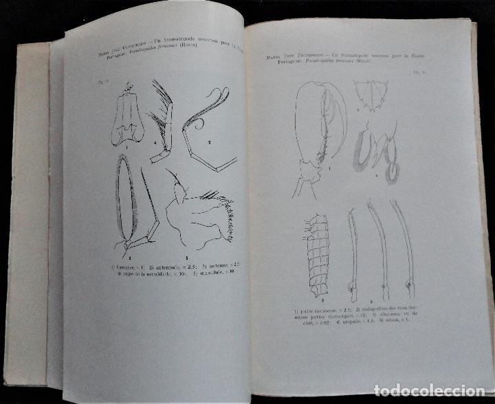 Libros antiguos: BOLETIM SOCIEDADE PORTUGUESA CIÊNCIAS NATURAIS - Lisboa 1961 - 1962. Mapa Geológico Mortágua - Foto 5 - 265804289