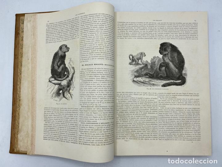 Libros antiguos: LA HISTORIA NATURAL. DR. A. E. BREHM. DEL TOMO 1 AL 7. EDITORES MONTANER Y SIMON.BARCELONA,1880-81. - Foto 4 - 269069853